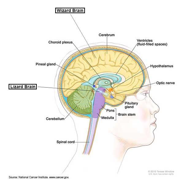 teenage brain graphic